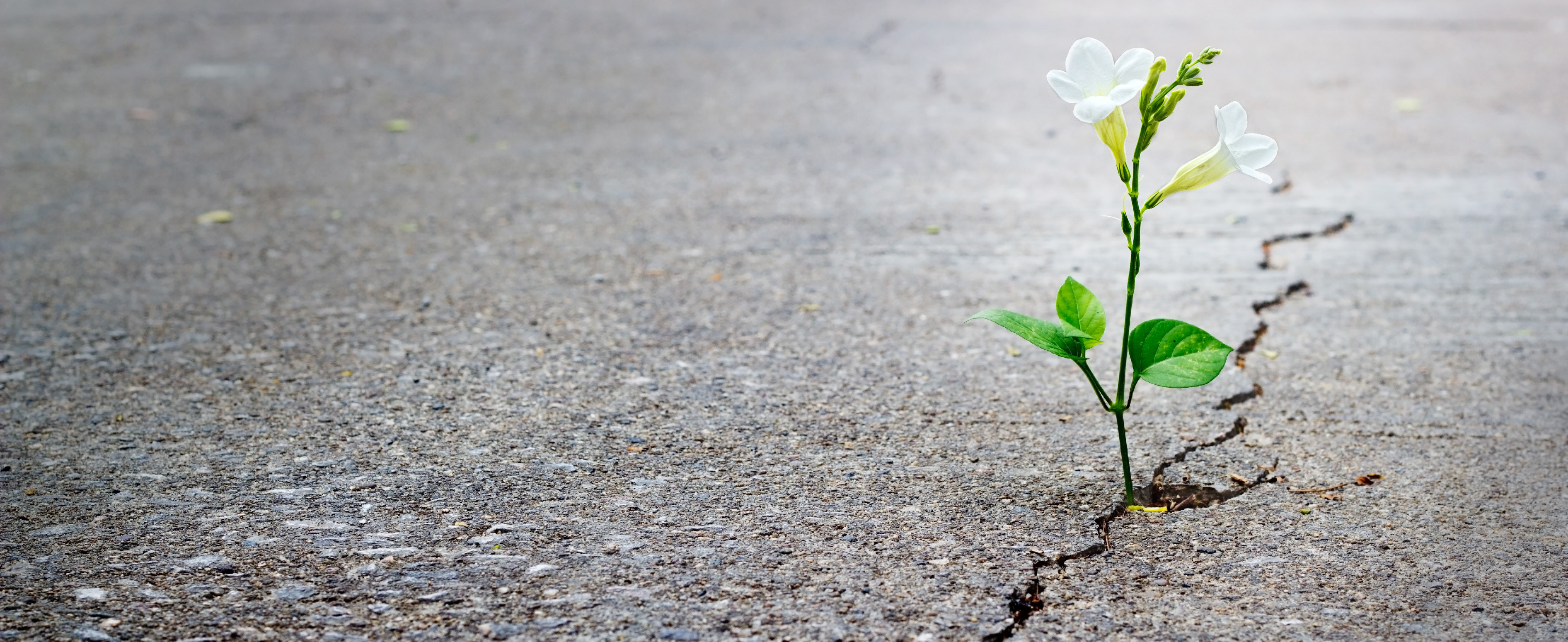 A flower growing in a crack in the cement