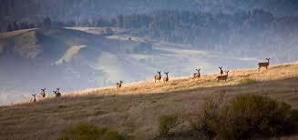wildlife in a pasture