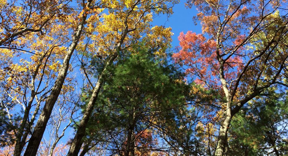 Kelly Field Trees