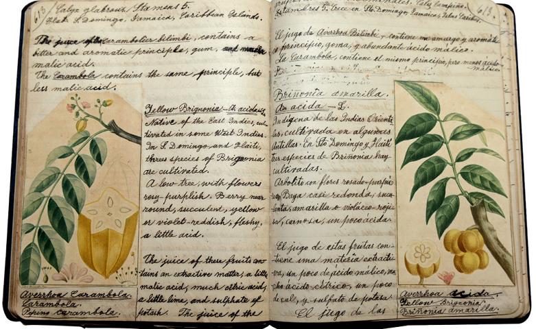 Image of suffragist Anna Duprey's manuscript