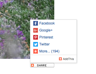 Example of the Share Widget menu showing Facebook, Google Plus, Pinterest, Twitter and More.