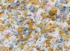 plastics bags, no on prop65 , yes on prop 67, pollution, climate change, voting, ballot endorsements, League of Women Voters, California,
