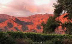 Pink Moment for Ojai Pub Night