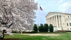 WashingtonDCCherryBlossoms