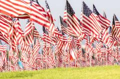 USA Flags Flying over a Field