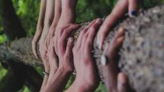 photo of diverse skin colored hands on tree trunk