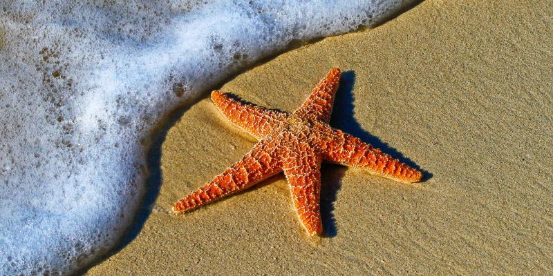 Photo of starfish on sand
