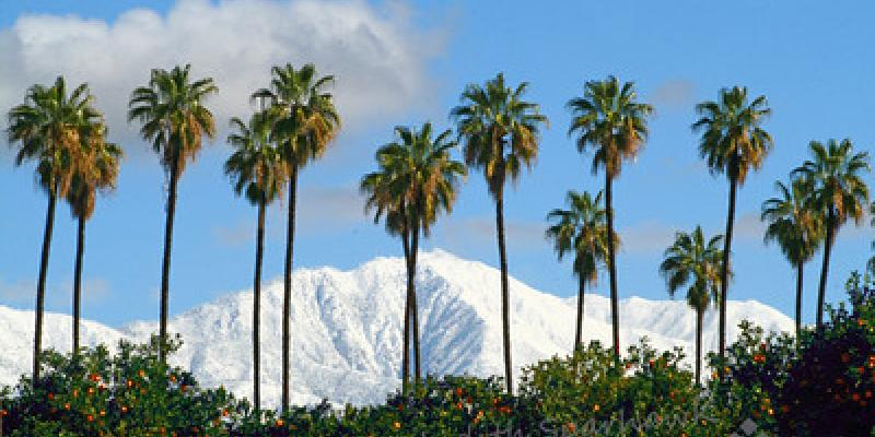 Redlands in the Winter