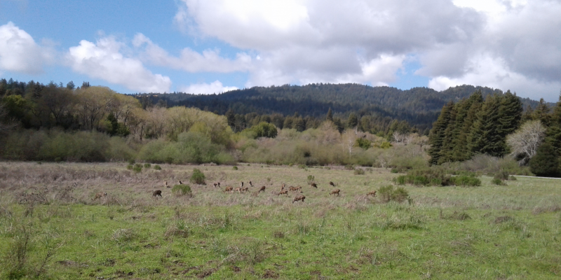 Meadow near the entrance of Henry Cowell State Park, Santa Cruz County, CA