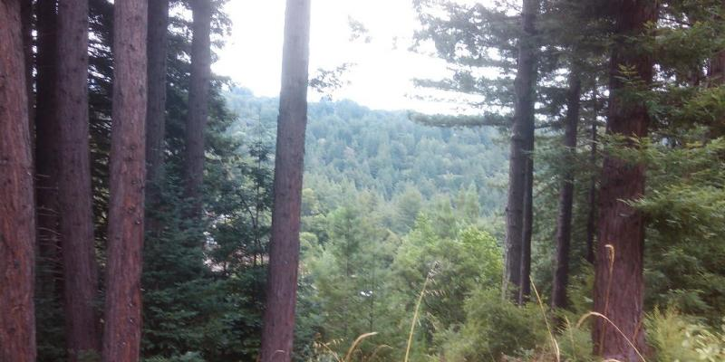View of Scotts Valley from top of Lodato Park